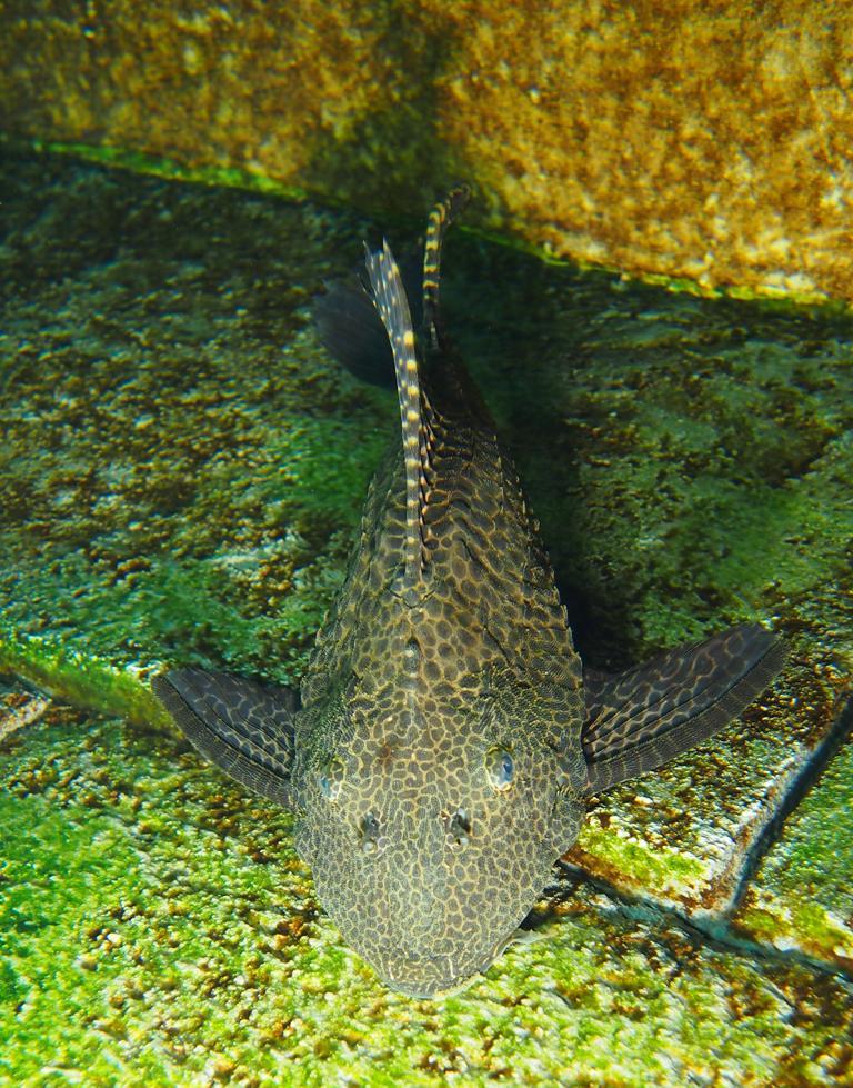 Fisch01
