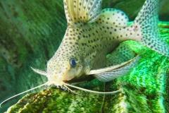 Fisch02
